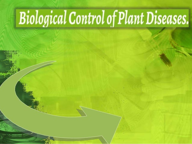 What is biological control of plant diseases ? Biological control involves the use of one living organism to control anoth...