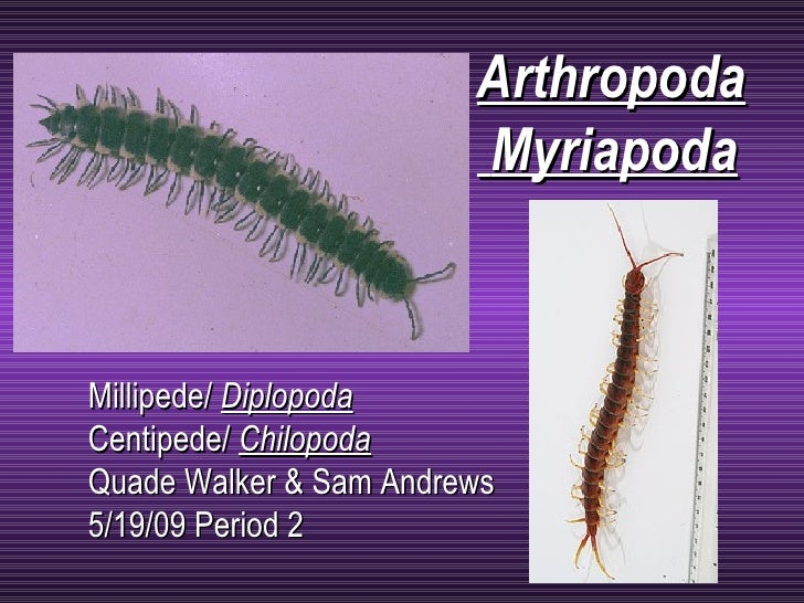 Millipede/  Diplopoda Centipede/  Chilopoda   Quade Walker & Sam Andrews 5/19/09 Period 2 Arthropoda Myriapoda