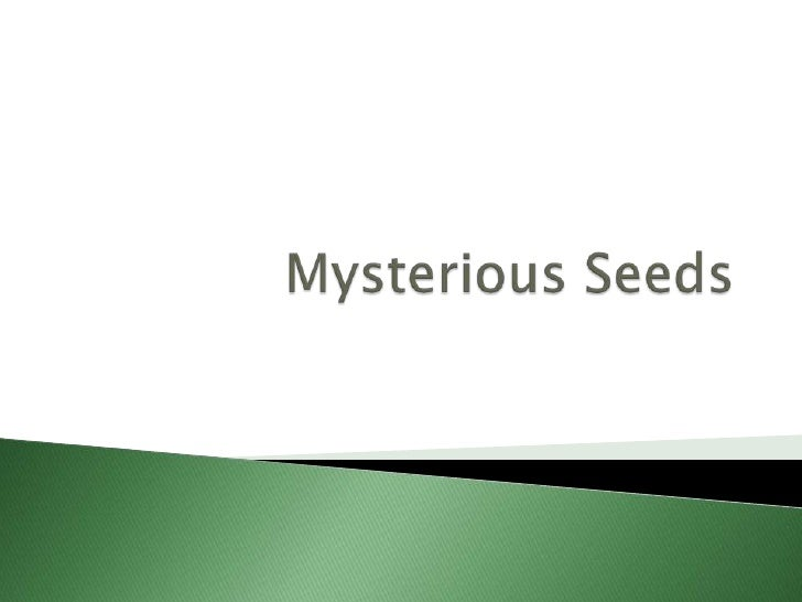 Mysterious Seeds  356 Indicator