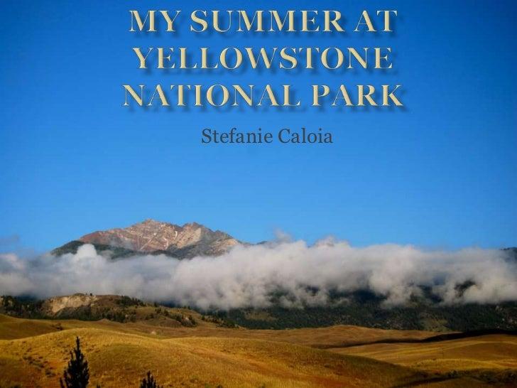 My summer at yellowstone national park