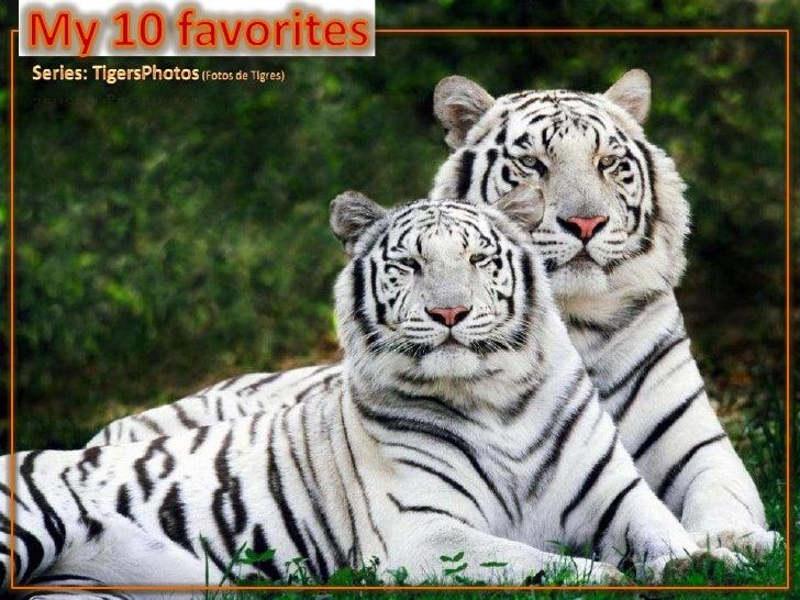 My 10 favorites<br />Series: TigersPhotos (Fotos de Tigres)<br />