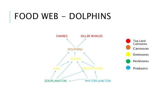 Dolphin Food Chain Diagram Crazywidowfo