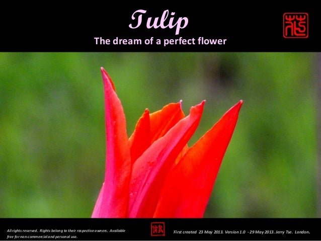 Tulip - The Dream of a Perfect Flower