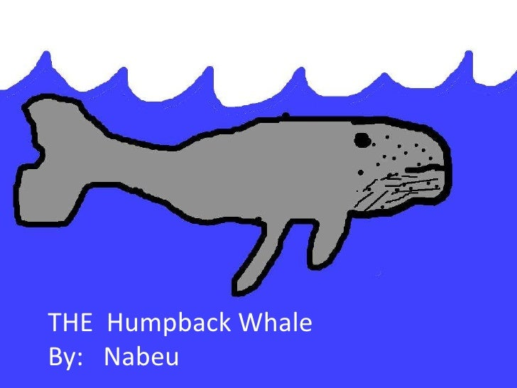 THE Humpback WhaleBy: Nabeu