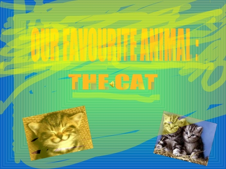 OUR FAVOURITE ANIMAL : THE CAT