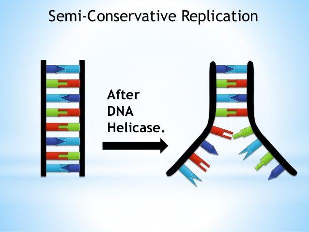 Bildresultat för dna helicase