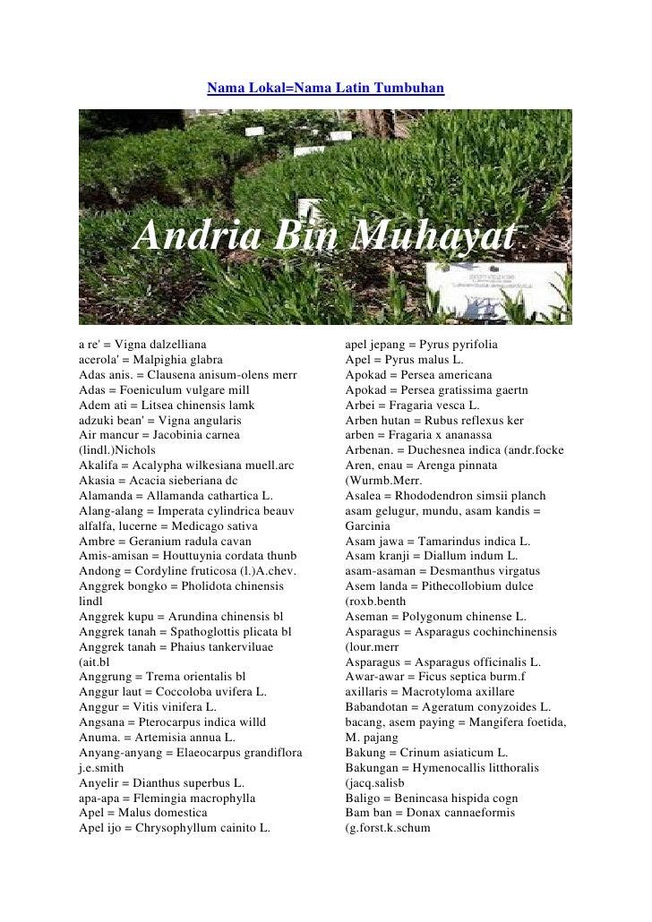 Nama nama latin tumbuhan andria