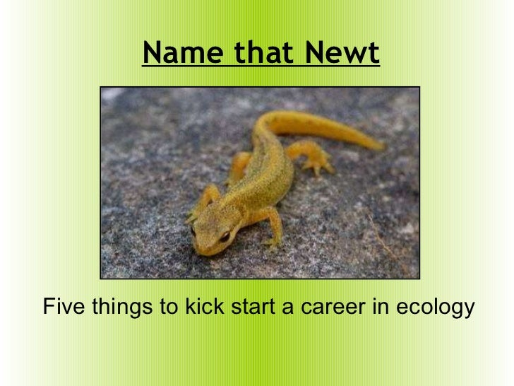 Name that Newt Five things to kick start a career in ecology