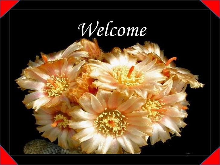 N Welcome