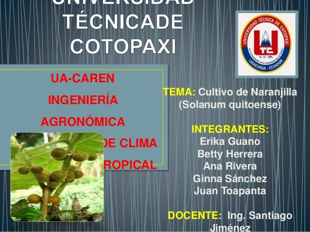 TEMA: Cultivo de Naranjilla  (Solanum quitoense)  INTEGRANTES:  Erika Guano  Betty Herrera  Ana Rivera  Ginna Sánchez  Jua...