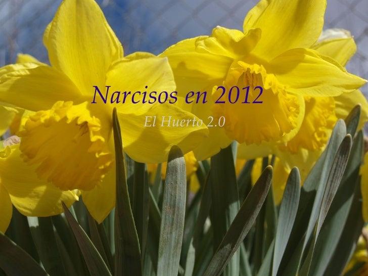 Narcisos en 2012    El Huerto 2.0