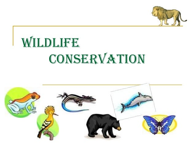 How do you become a Missouri Wildlife Conservationist?