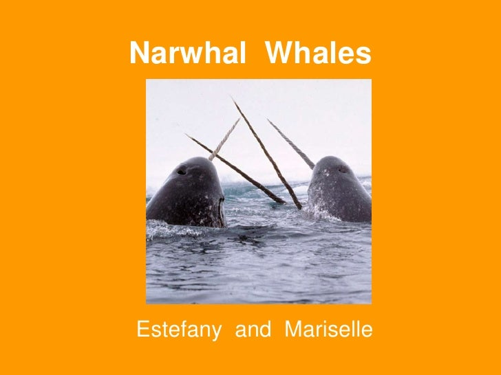 Narwhal  Whales<br />Estefany  and  Mariselle<br />