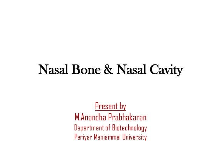 Nasal Bone & Nasal Cavity            Present by      M.Anandha Prabhakaran      Department of Biotechnology      Periyar M...