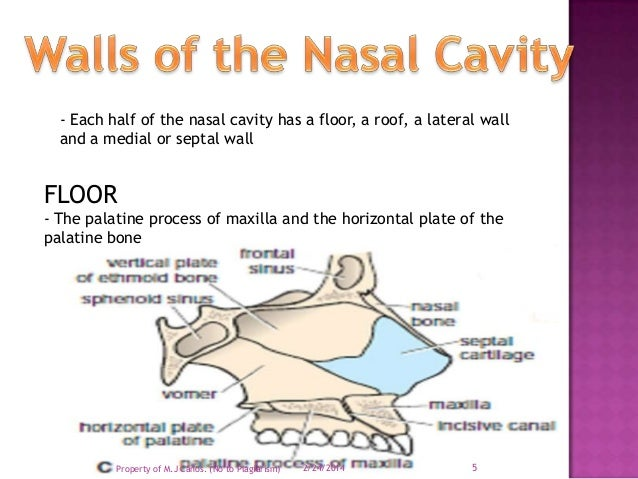 nasal cavity On floor of nasal cavity