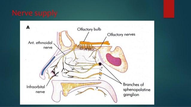 Chapter 12 Nervous system Flashcards Quizlet 7230710 - salonurody.info