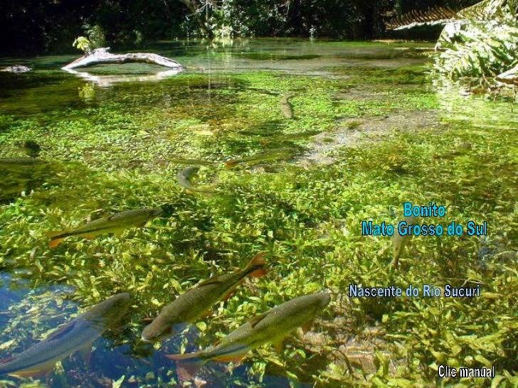 Bonito Mato Grosso do Sul Nascente do Rio Sucuri Clic manual
