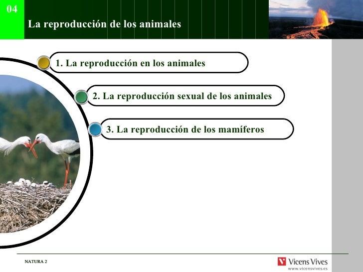 La reproducci ón de los animales 3.  La reproducci ón de los mamíferos 2.  La reproducci ón sexual de los animales 1.  La ...