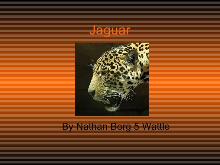 Jaguar  By Nathan Borg 5 Wattle