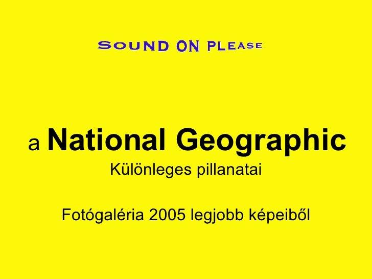 a  National Geographic Különleges pillanatai Fotógaléria 2005 legjobb képeiből