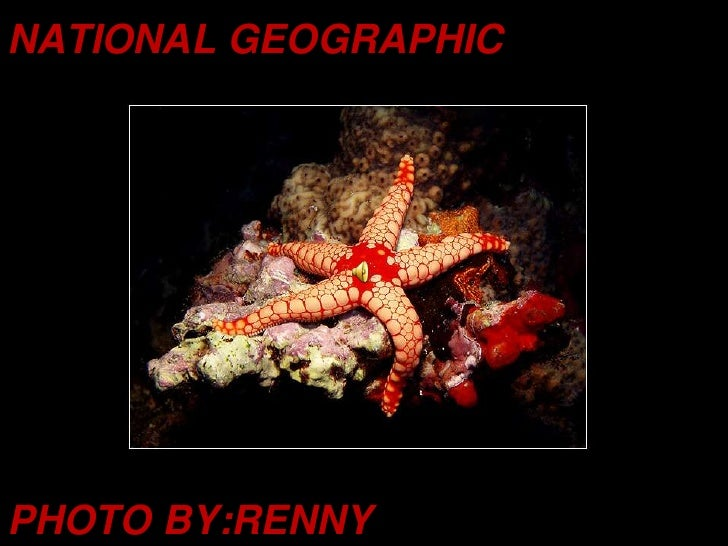NATIONAL GEOGRAPHIC<br />PHOTO BY:RENNY<br />