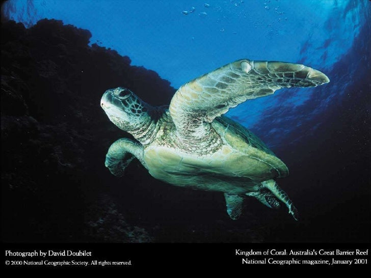 National Geographic 1