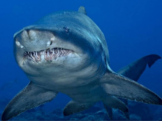 National Geographic Photographers: Brian Skerry
