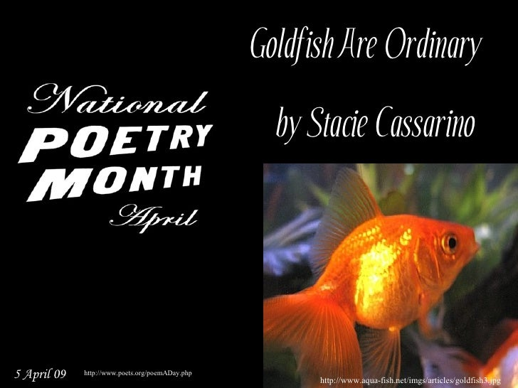 Goldfish Are Ordinary                                                     by Stacie Cassarino     5 April 09   http://www...
