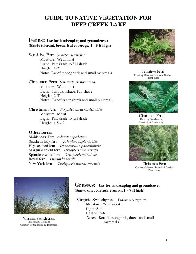 GUIDE TO NATIVE VEGETATION FOR                              DEEP CREEK LAKE       Ferns:     Use for landscaping and groun...