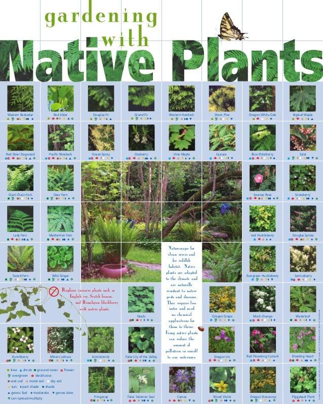 Gardening with Native Plants - Seattle, Washington