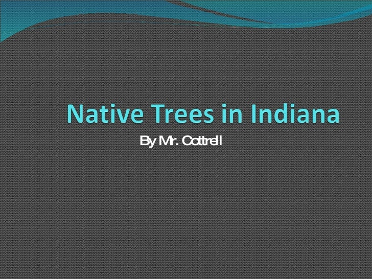 Native Trees In Indiana