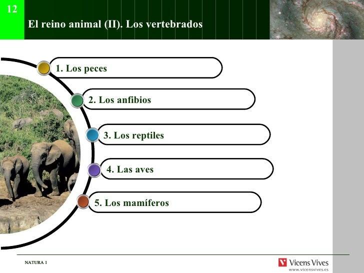 El reino animal (II). Los vertebrados 5. Los mam íferos   4. Las aves   3. Los reptiles   2. Los anfibios 1. Los peces  12