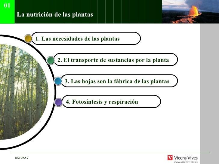 La nutrici ón de las plantas 4.  Fotosíntesis y respiración   3.  Las hojas son la fábrica de las plantas   2.  El transpo...