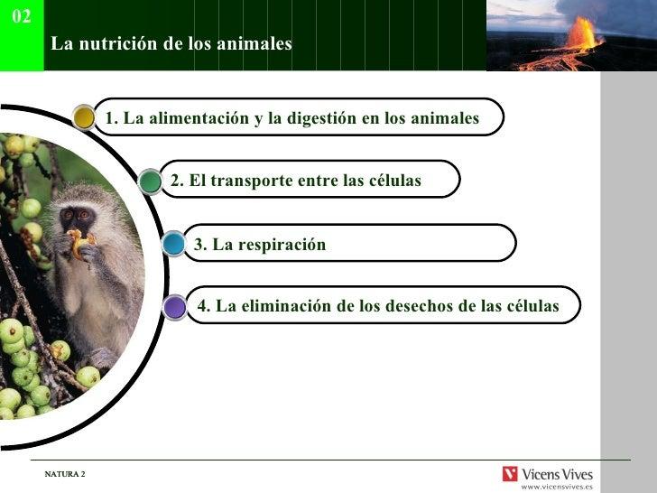 La nutrici ón de los animales 4.  La eliminación de los desechos de las células 3.  La respiración   2.  El transporte ent...