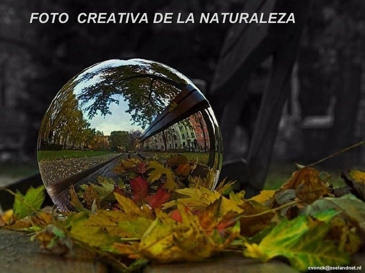 [email_address] FOTO  CREATIVA DE LA NATURALEZA
