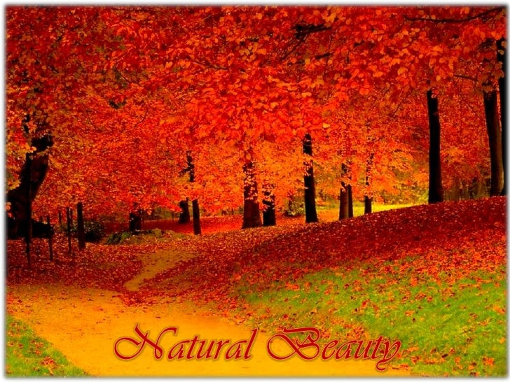 Natural Beauty<br />