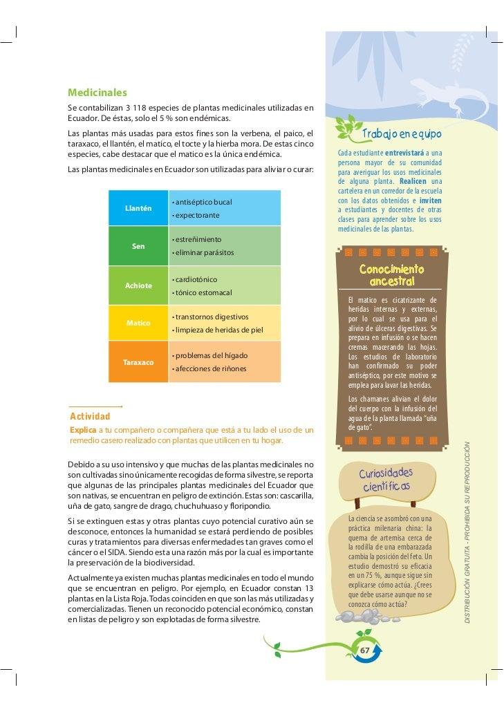 MedicinalesSe contabilizan 3 118 especies de plantas medicinales utilizadas enEcuador. De éstas, solo el 5 % son endémicas...