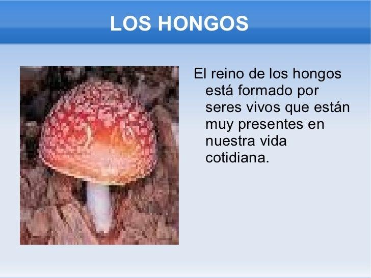 LOS HONGOS <ul><li>El reino de los hongos está formado por seres vivos que están muy presentes en nuestra vida cotidiana. ...