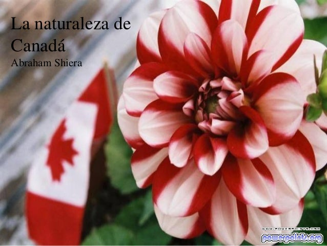 La naturaleza de Canadá Abraham Shiera  Tem coisa melhor?
