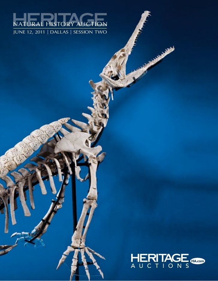 an introduction to the history of dinosaurs Check out exclusive dinosaurs videos and features browse the latest dinosaurs videos and more on historycom.