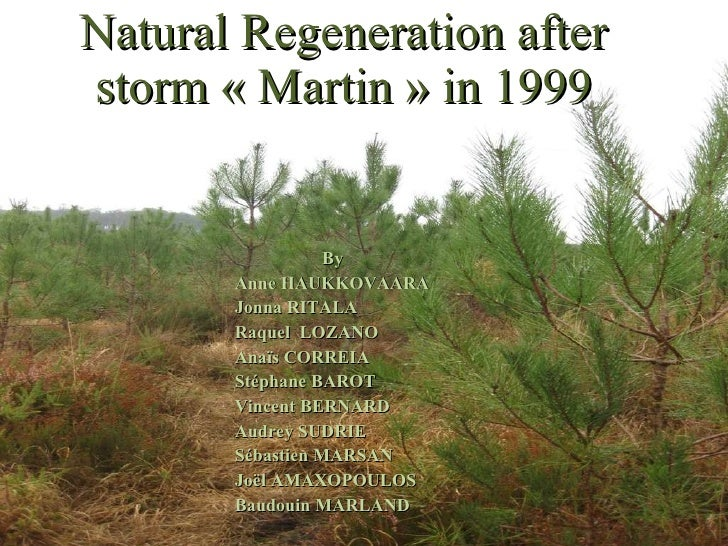 Natural Regeneration after storm «Martin» in 1999 By Anne HAUKKOVAARA Jonna RITALA Raquel  LOZANO Anaïs CORREIA Stéphane...