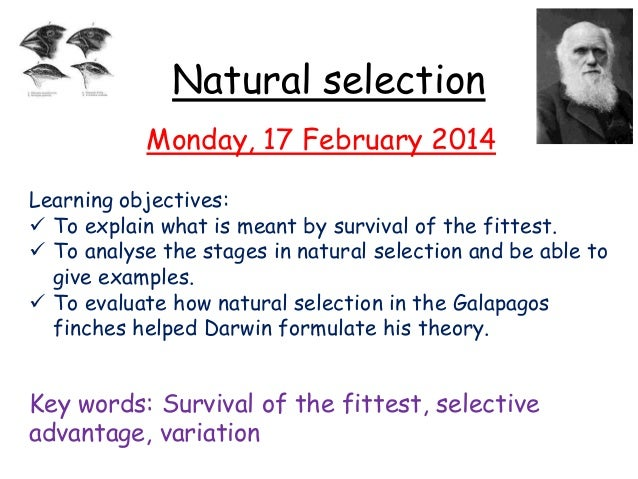 Natural selection Monday, 17 February 2014 Learning objectives:  To explain what is meant by survival of the fittest.  T...