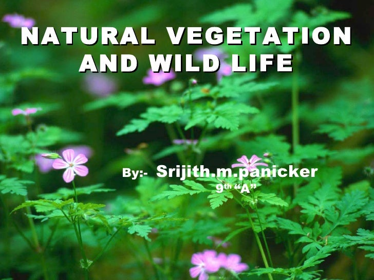 """NATURAL VEGETATION   AND WILD LIFE     By:-   Srijith.m.panicker                  9th """"A"""""""