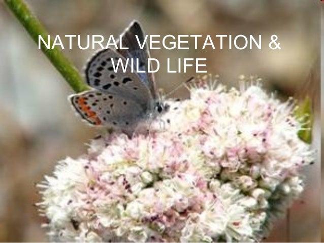 NATURAL VEGETATION & WILD LIFE