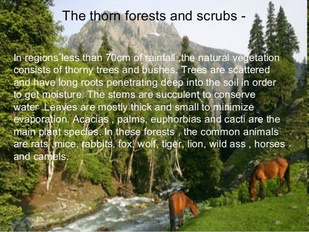 different types of forests essay Distinguishing the differences between different compare and contrast-this type of i have received answer to all of my questions connected with essay.