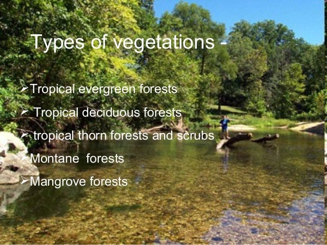 Essay on natural vegetation of india