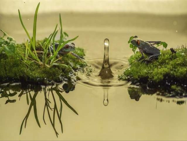 Photographs by Amateur Photographer Kutub Uddin This photos was caught on camera by amateur photographer Kutub Uddin, 27, ...