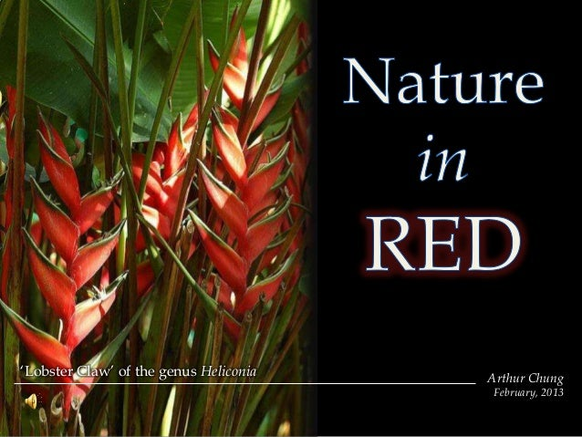 Nature in red
