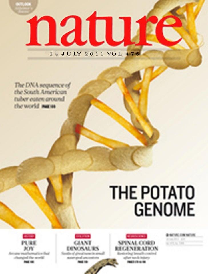 Nature potato