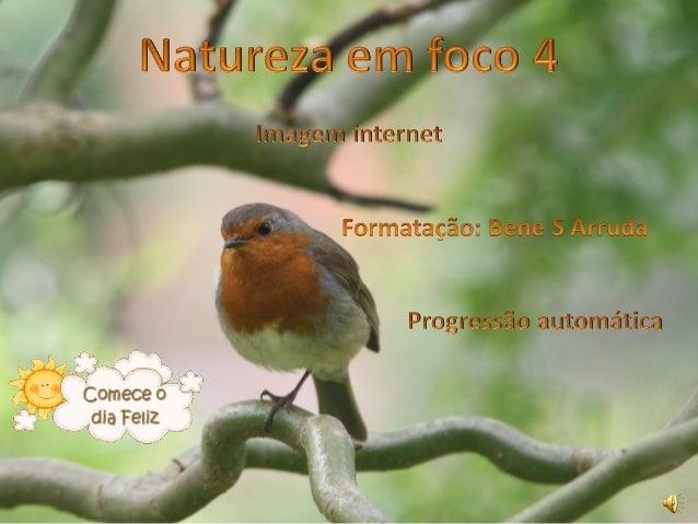 Natureza em foco 4